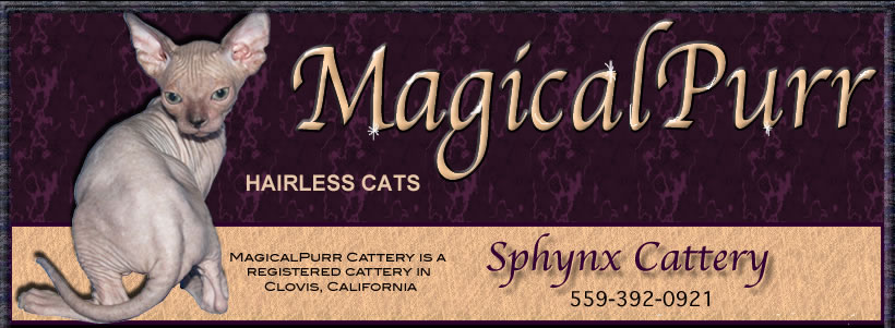 Magical Purr Sphynx Cattery
